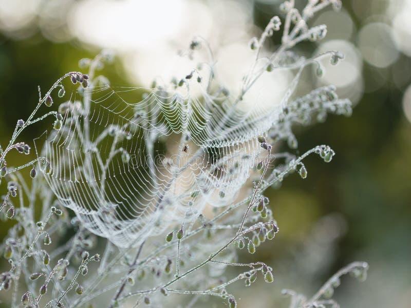Spiderweb i morgondagg arkivbild