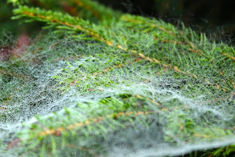 Spiderweb i wodne kropelki zdjęcie stock