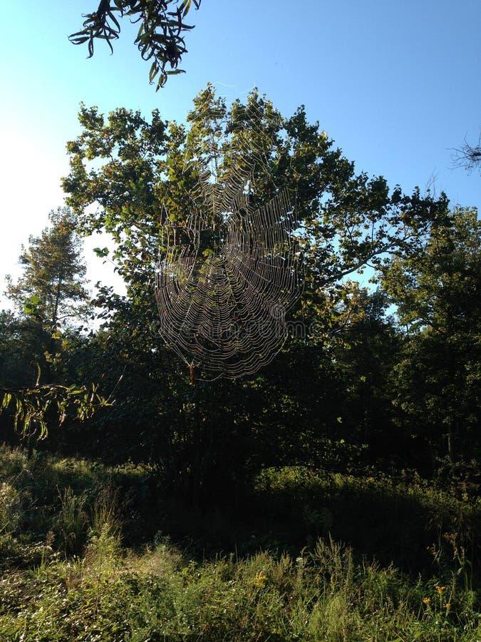 Spiderweb im Sonnenlicht lizenzfreie stockfotografie