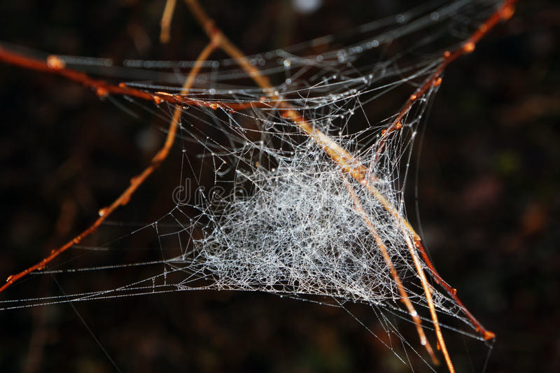 Spiderweb im Wald lizenzfreie stockfotos