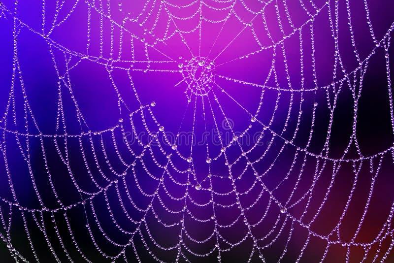 Spiderweb med dagg tappar arkivfoton