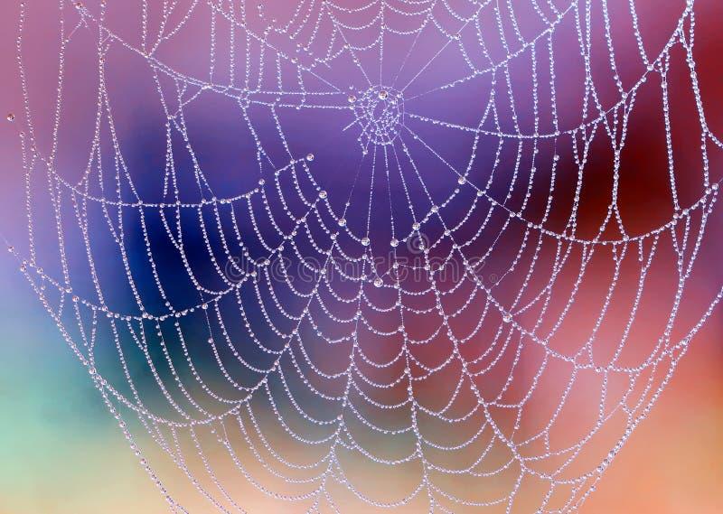 Spiderweb med dagg tappar royaltyfri bild
