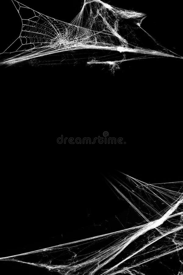 Spiderweb med spindlar som isoleras på svart grungebakgrund Halloween deltagare royaltyfri foto