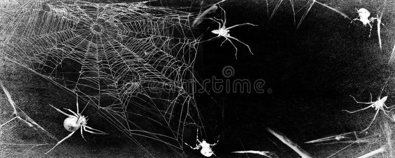 Spiderweb med spindlar som isoleras på svart grungebakgrund Panorama- svartvit illustration för allhelgonaaftonparti royaltyfri fotografi