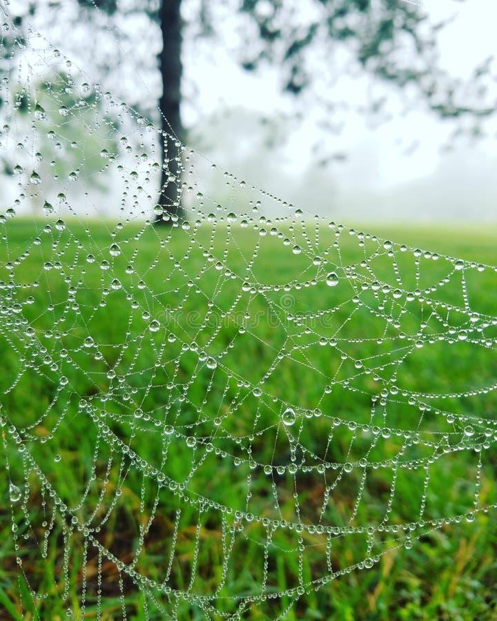 Spiderweb met dauw stock fotografie