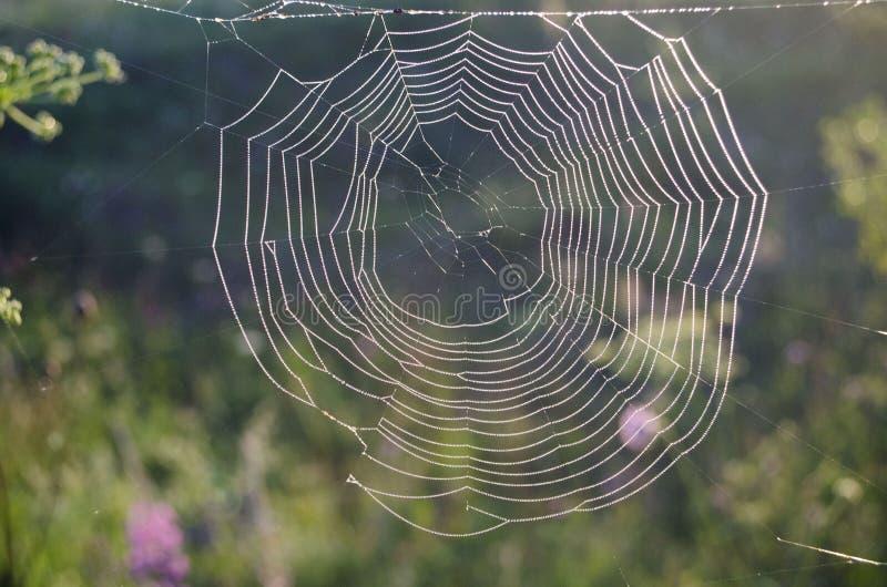Spiderweb met dauwdalingen bij zonsopgang wordt behandeld die stock foto