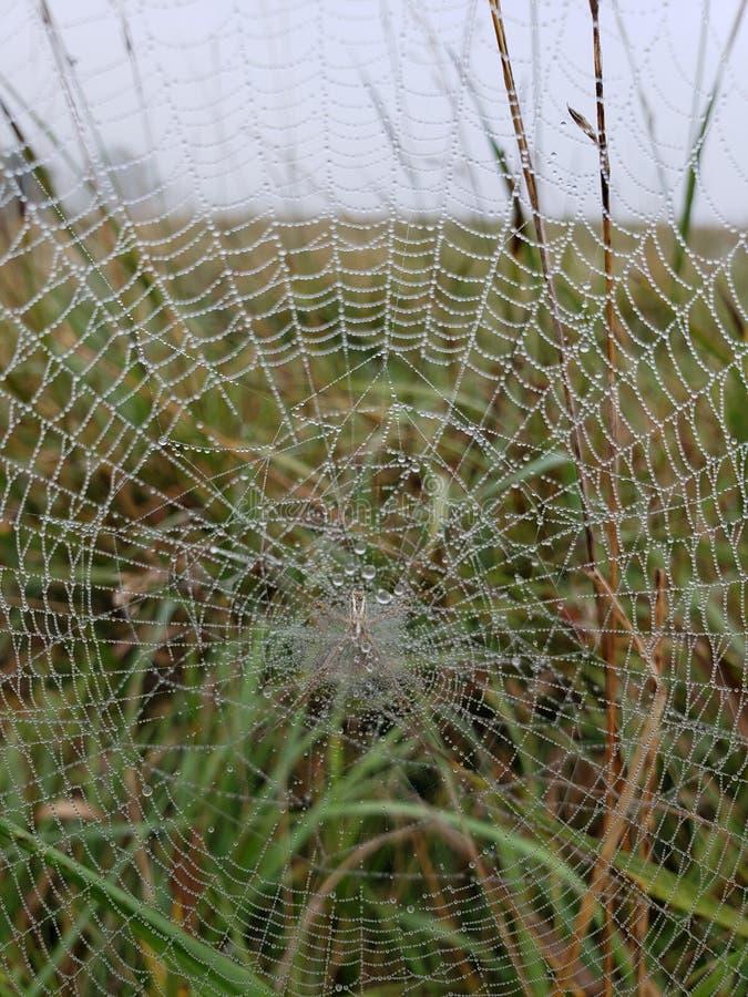 Spiderweb mit Morgentau stockfoto