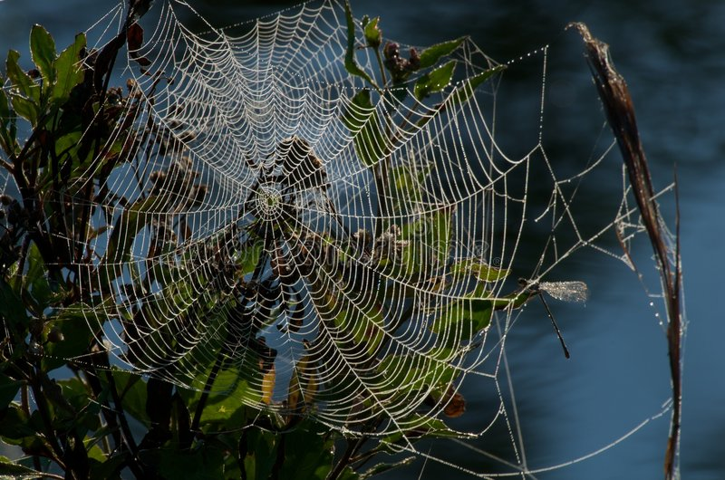 Spiderweb in morning