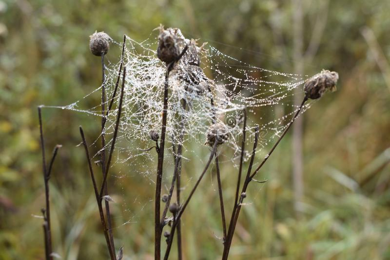 Spiderweb na manhã chuvosa imagens de stock royalty free