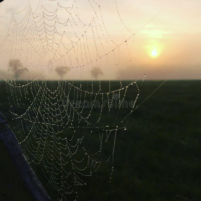 Spiderweb - natte spiderweb - spiderweb in de winter royalty-vrije stock afbeelding