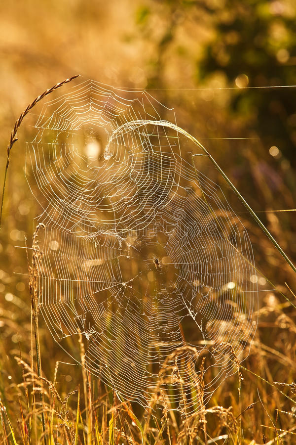 Spiderweb no close up da grama fotografia de stock royalty free