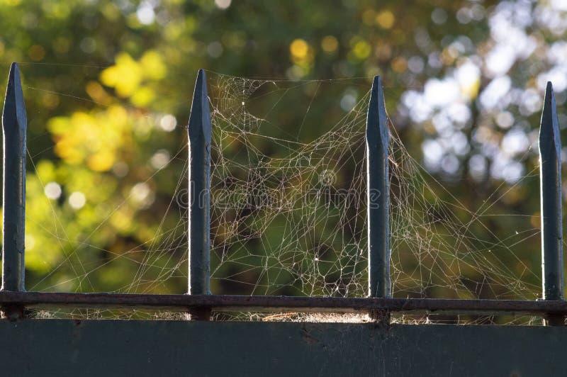 Spiderweb på en metallspisgaller royaltyfria bilder