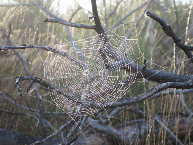 Spiderweb som skiner med dimmasmå droppar i solskenet arkivbilder