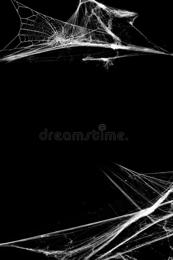 Spiderweb with spiders isolated on black grunge background. Halloween party. Black and white illustration. Texture of cobweb. Horror, scary Halloween royalty free stock photo