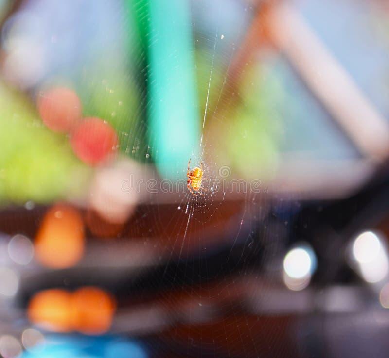 Spiderweb of spin op horizontale achtergrond stock afbeeldingen