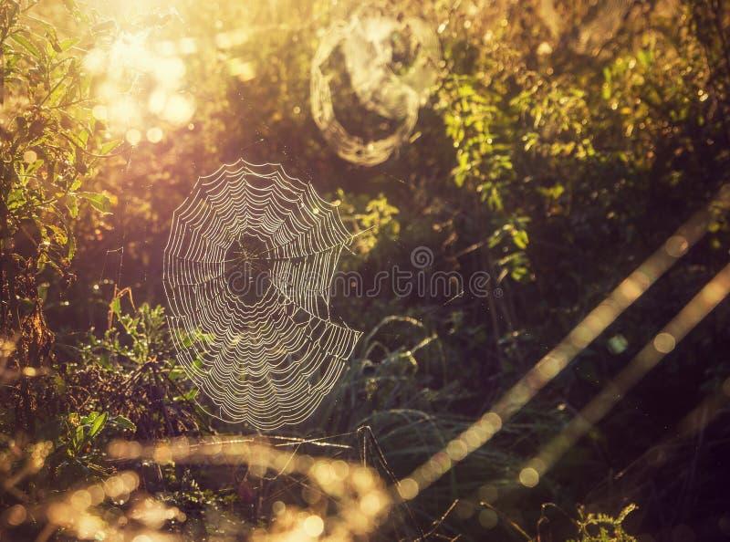 Download Spiderweb in sun stock image. Image of strand, webbing - 36826917
