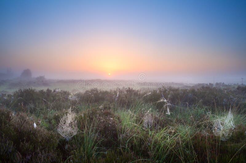 Spiderweb in sunrise light