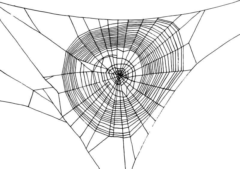 Spiderweb tirado mão ilustração royalty free