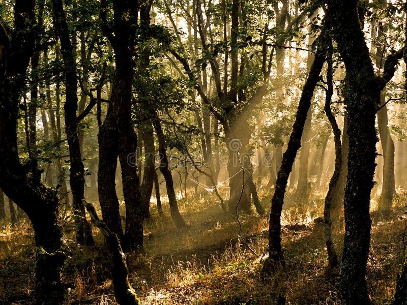 Spiderweb w lesie zdjęcie stock