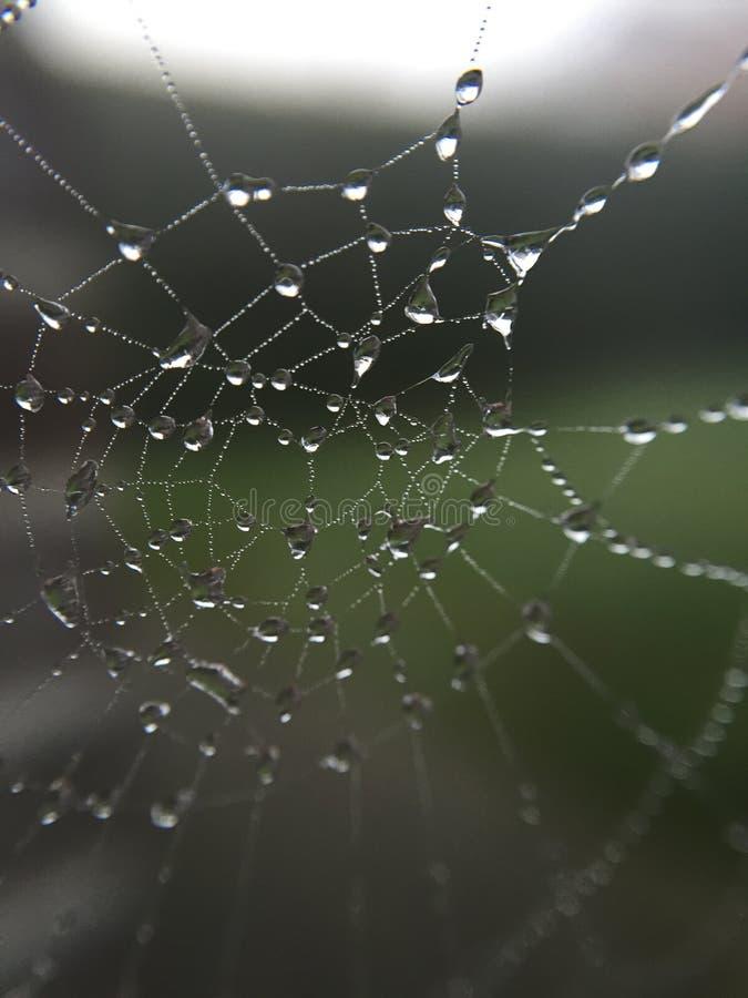 Spiderweb stock image