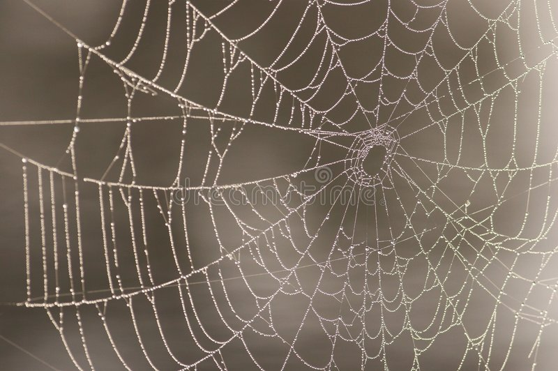 Spiderweb with water droplets stock photos