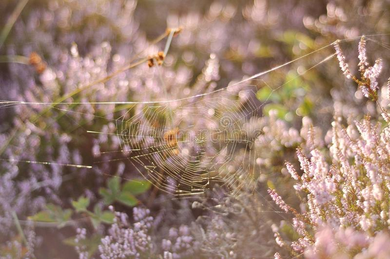 Spiderweb in wildflowers stock images