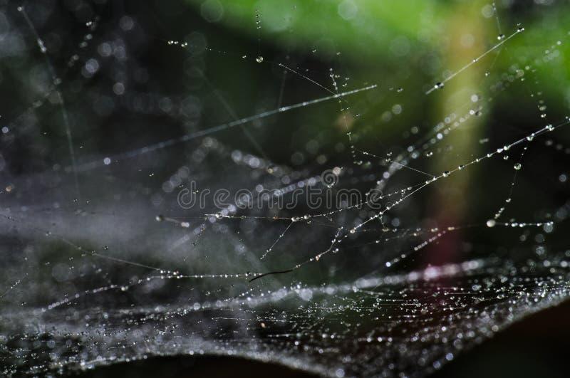 Spiderweb zakrywał wodnymi kropelkami obrazy stock