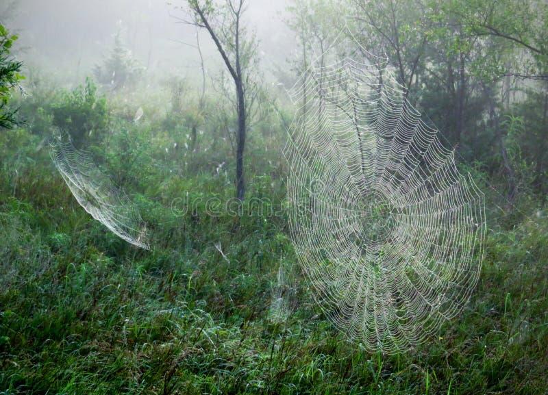 Spiderwebs en una mañana de niebla foto de archivo