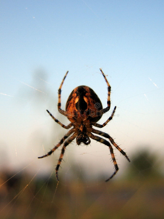 Download Spidey Beauty Stock Photo - Image: 1412500