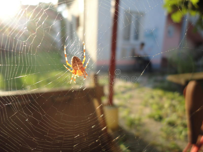 Spidy obrazy royalty free