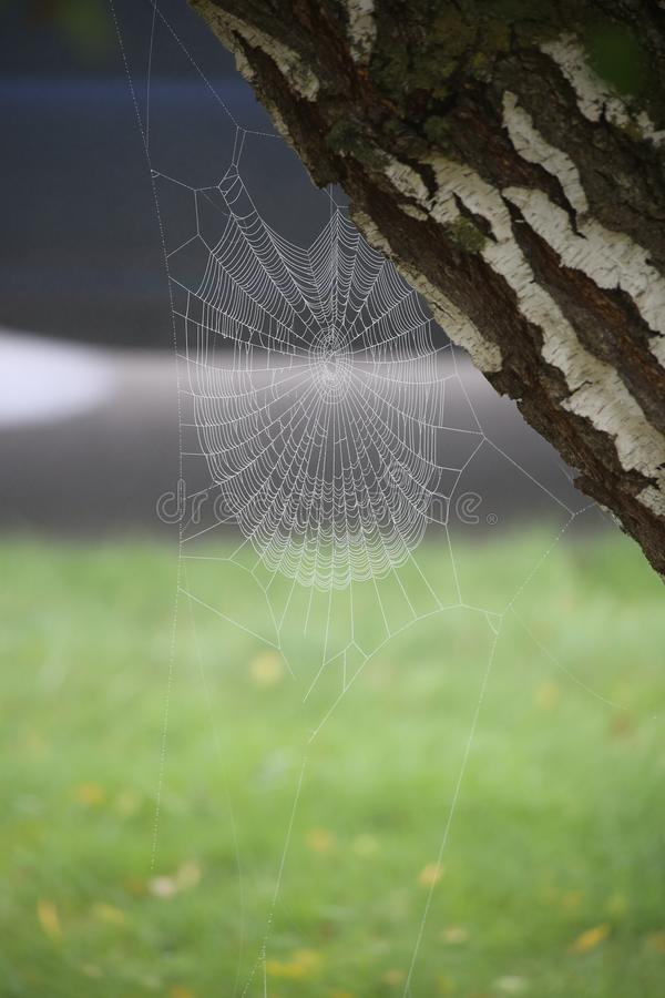 Spidy Dew stock photo
