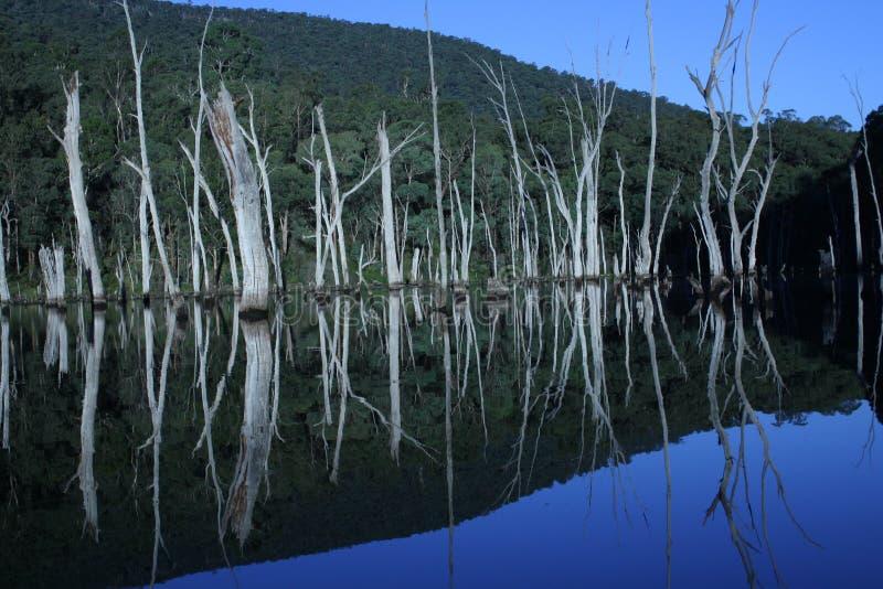 Spiegelbeeld stock fotografie