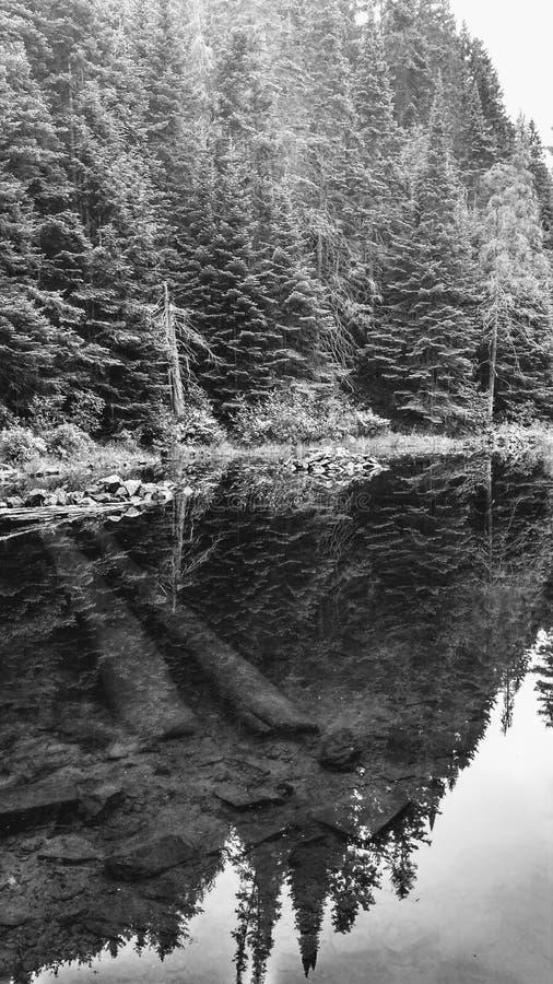 Spiegelmening van een meer in Algonquin Park, Ontario, Canada stock foto's