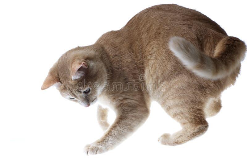 Spiel der Katzen lizenzfreies stockbild