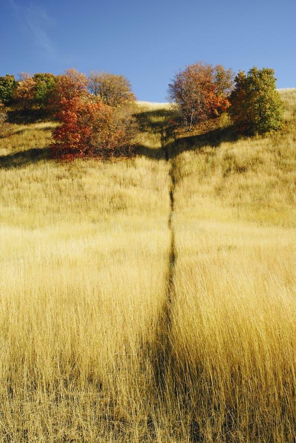 Spiel-Spur im goldenen Gras im Herbst lizenzfreies stockfoto