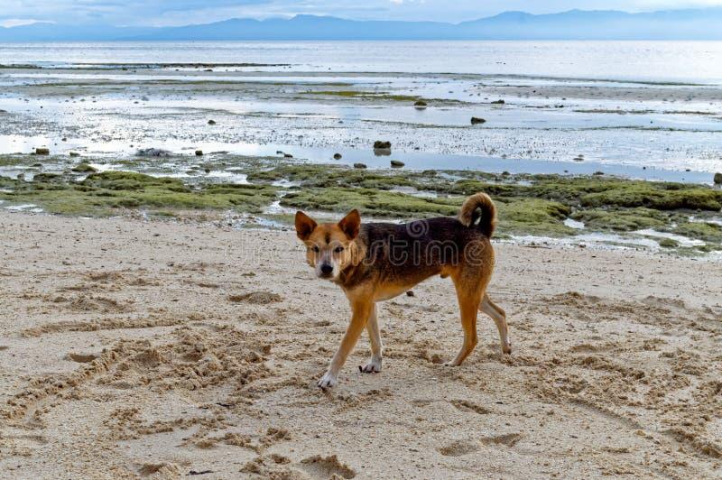 Spielen mit meinem Hund am Strand stockbilder