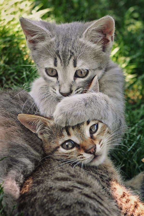 Spielen mit zwei Kätzchen lizenzfreie stockfotografie