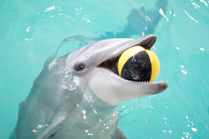 Spielerischer Delphin mit Kugel lizenzfreies stockfoto