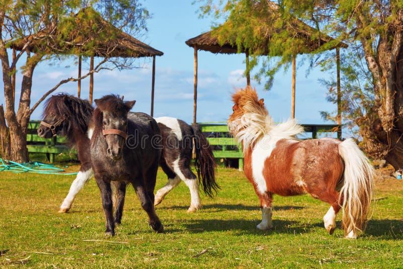 Spielerisches Pony drei lizenzfreies stockbild