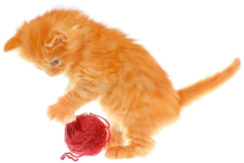 Spielerisches rotes behaartes Kätzchen mit einem Ball stockfotografie