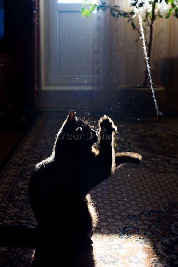 Spielerisches schwarzes Kätzchen in der Dunkelkammer stockfotos