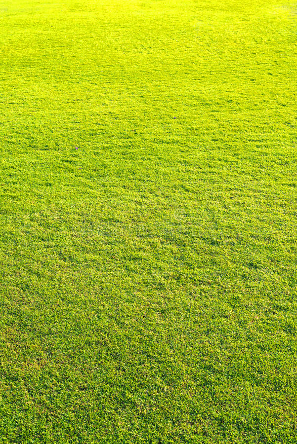 Spielplatz, grünes Rasenmuster, natürlicher Hintergrund des grünen Grases stockbilder