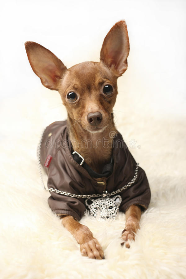 Spielzeug-Hund stockbilder