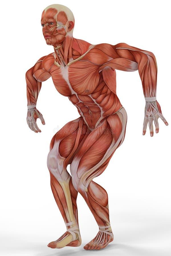 Spier het medische mens uitgaan vector illustratie