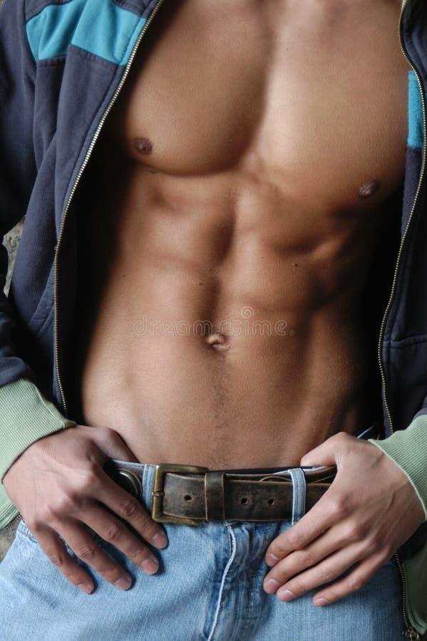 Spier mannelijk torso royalty-vrije stock afbeelding