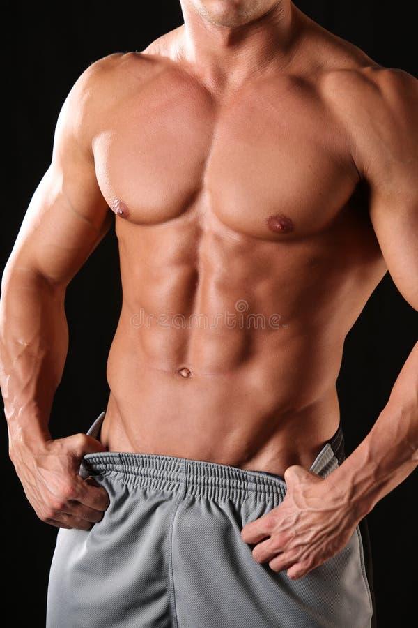 Spier mannelijk torso stock afbeelding