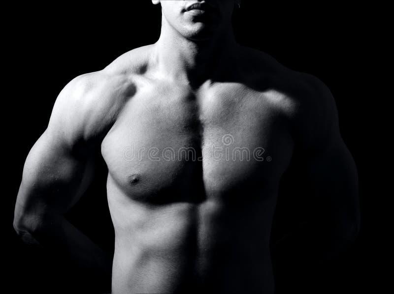 Spier mannelijk torso royalty-vrije stock fotografie