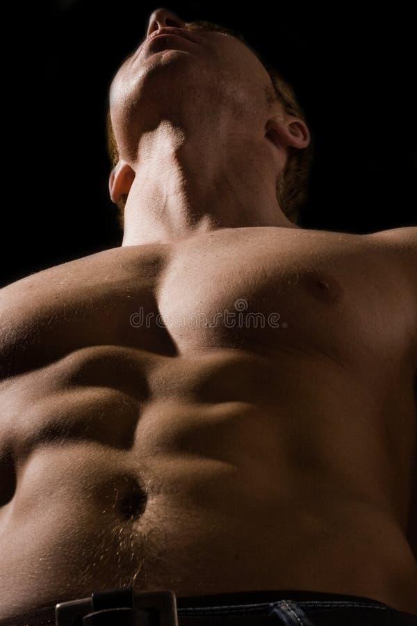 Spier mannelijke bodybuilder stock fotografie