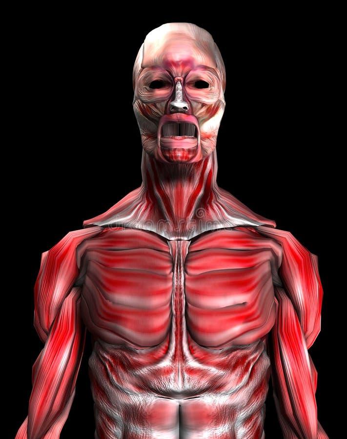 Spieren 6 vector illustratie