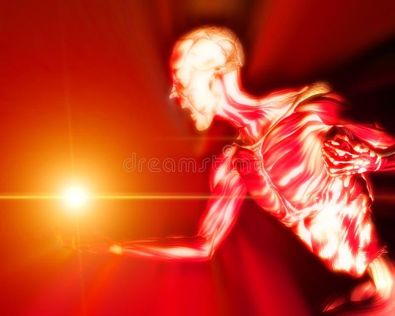 Spieren op Menselijk Lichaam 12 royalty-vrije illustratie